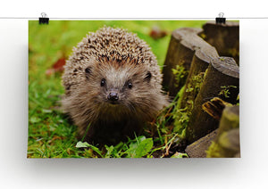 Hedgehog Print - Canvas Art Rocks - 1