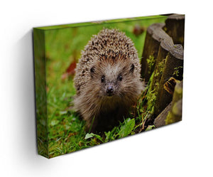 Hedgehog Print - Canvas Art Rocks - 3