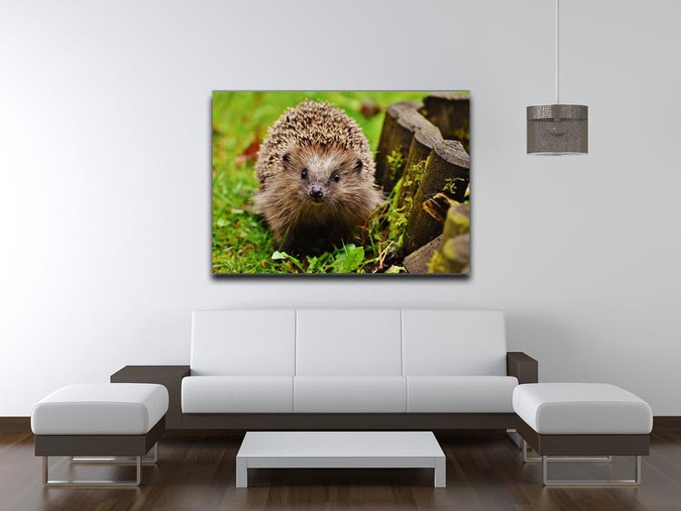 Hedgehog Print - Canvas Art Rocks - 4