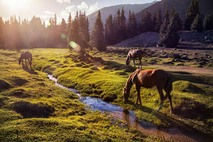 Horses in the Gregory gorge mountains Wall Mural Wallpaper - Canvas Art Rocks - 1
