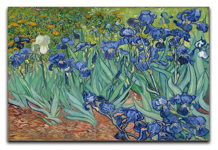 Irises Canvas Print or Poster