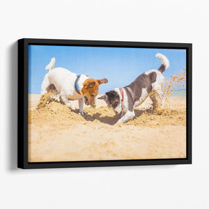 Jack russell couple of dogs digging a hole Floating Framed Canvas - Canvas Art Rocks - 1
