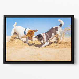 Jack russell couple of dogs digging a hole Floating Framed Canvas - Canvas Art Rocks - 2