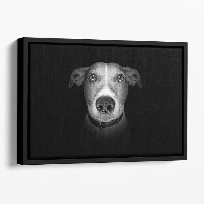 Jack russell terrier dog isolated on black dark background Floating Framed Canvas