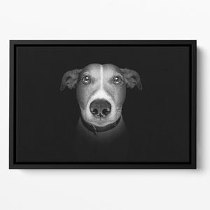 Jack russell terrier dog isolated on black dark background Floating Framed Canvas - Canvas Art Rocks - 2