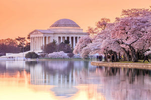 Jefferson Memorial during the Cherry Blossom Festival Wall Mural Wallpaper - Canvas Art Rocks - 1