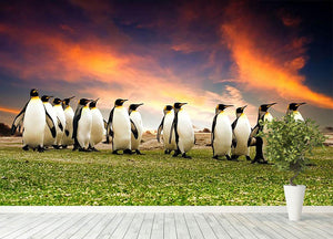 King Penguins in the Falkland Islands Wall Mural Wallpaper - Canvas Art Rocks - 4
