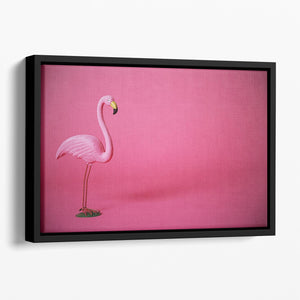 Kitsch pink flamingo in studio Floating Framed Canvas - Canvas Art Rocks - 1