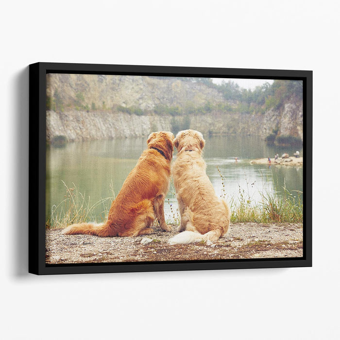 Lake for swimming. Two golden retriever dogs Floating Framed Canvas