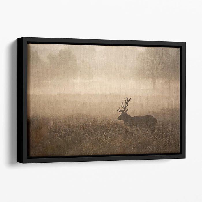 Large red deer stag in autumn mist Floating Framed Canvas