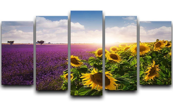 Lavender and sunflowers fields 5 Split Panel Canvas