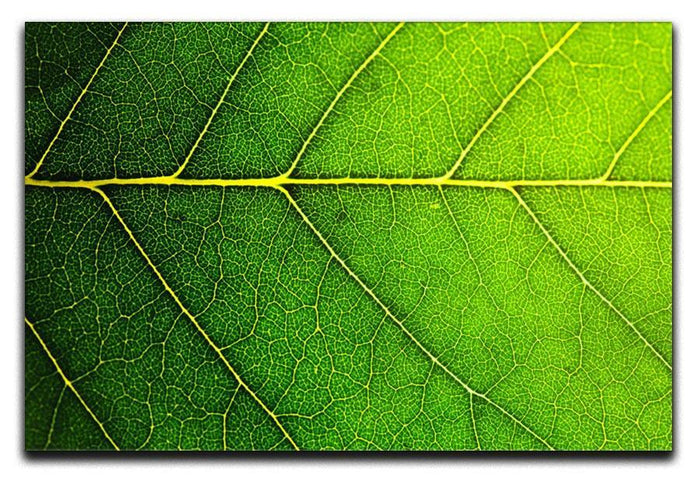 Leaf macro shot Canvas Print or Poster