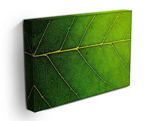 Leaf macro shot Canvas Print or Poster - Canvas Art Rocks - 3