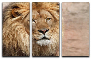 Lion 3 Split Panel Canvas Print - Canvas Art Rocks - 1