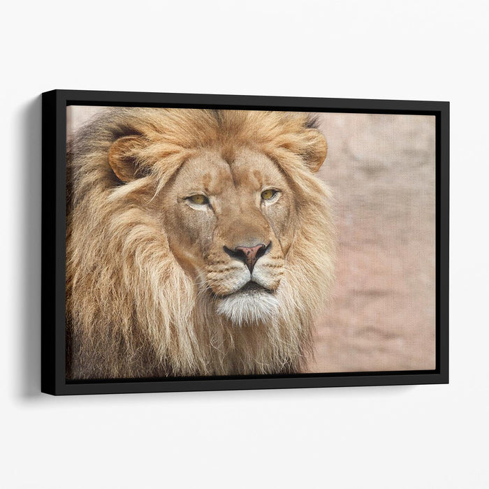 Lion Floating Framed Canvas