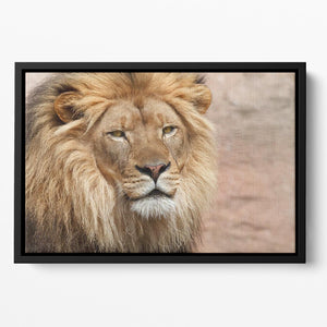 Lion Floating Framed Canvas - Canvas Art Rocks - 2