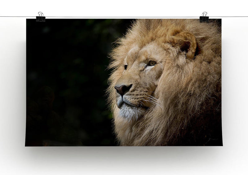 Lion Up Close Print - Canvas Art Rocks - 2