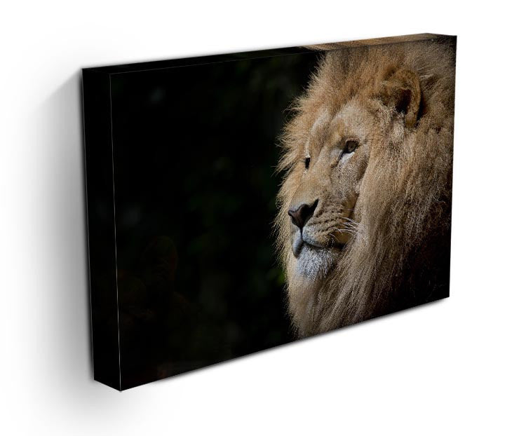 Lion Up Close Print - Canvas Art Rocks - 3