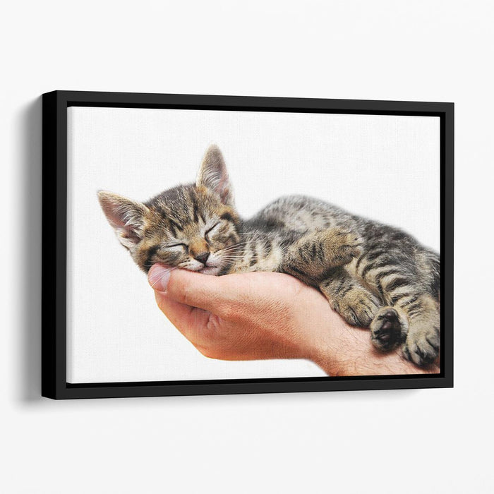 Little baby cat sleeping in male arms Floating Framed Canvas