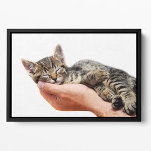 Little baby cat sleeping in male arms Floating Framed Canvas - Canvas Art Rocks - 2