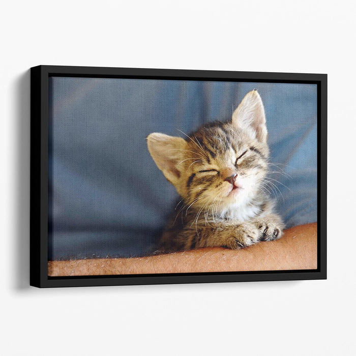 Little cat sleeping on human hand closeup Floating Framed Canvas