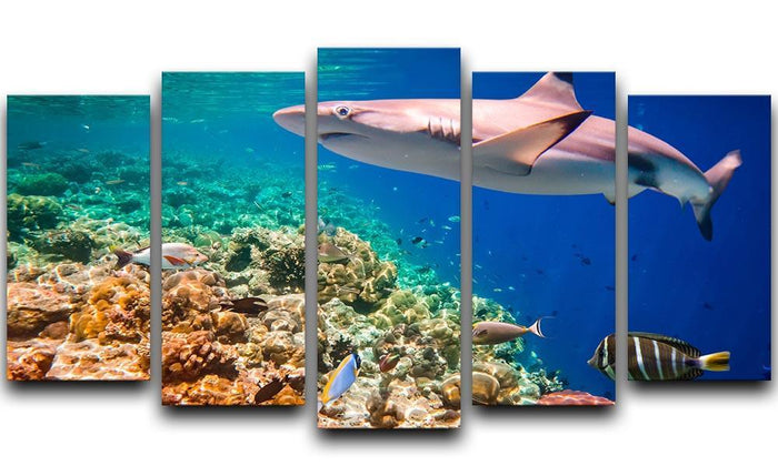 Maldives Indian Ocean coral reef 5 Split Panel Canvas