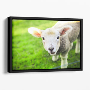 Mary had a little lamb Floating Framed Canvas - Canvas Art Rocks - 1