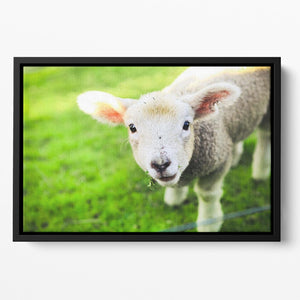 Mary had a little lamb Floating Framed Canvas - Canvas Art Rocks - 2