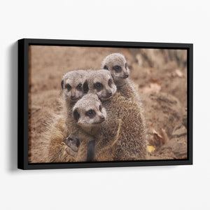 Meerkat family Floating Framed Canvas - Canvas Art Rocks - 1