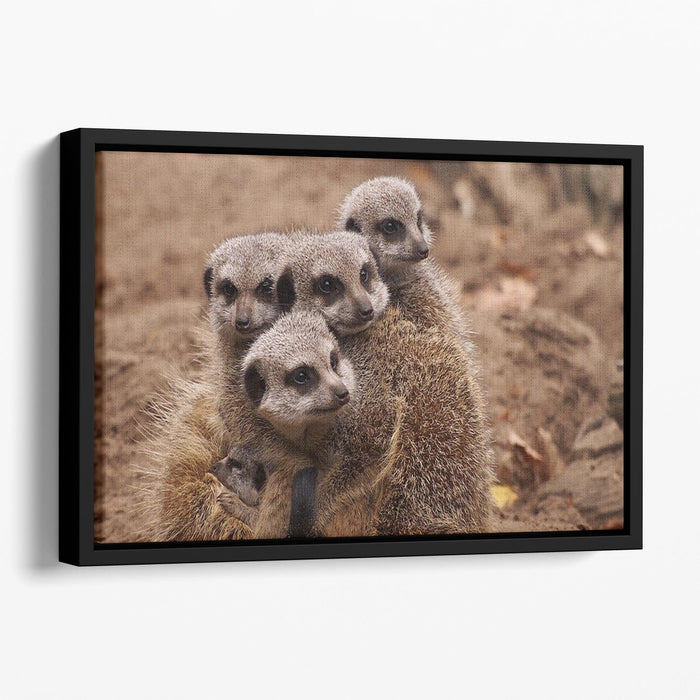 Meerkat family Floating Framed Canvas