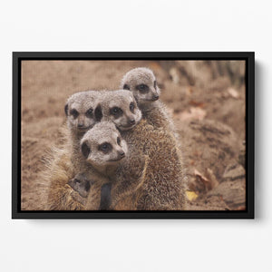Meerkat family Floating Framed Canvas - Canvas Art Rocks - 2