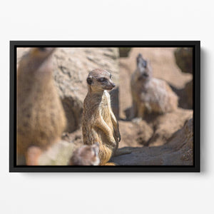 Meerkats in the wild Floating Framed Canvas - Canvas Art Rocks - 2