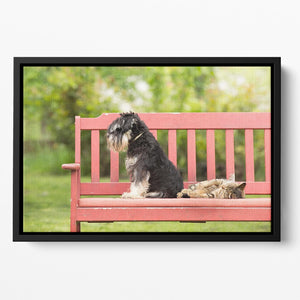 Miniature schnauzer turned back to its cat friend Floating Framed Canvas - Canvas Art Rocks - 2