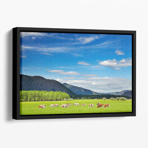 Mountain landscape with grazing cows and blue sky Floating Framed Canvas - Canvas Art Rocks - 1