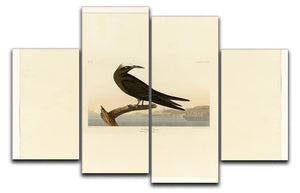 Noddy Tern by Audubon 4 Split Panel Canvas - Canvas Art Rocks - 1