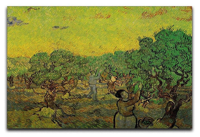 Olive Grove with Picking Figures by Van Gogh Canvas Print or Poster
