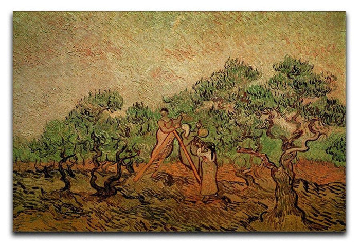 Olive Picking by Van Gogh Canvas Print or Poster