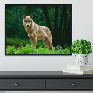 One wolf standing on green hill Framed Print - Canvas Art Rocks - 2