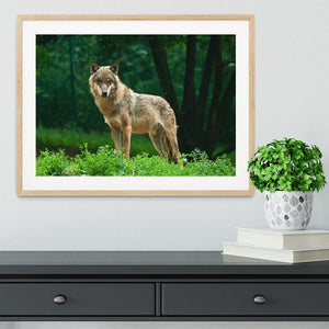 One wolf standing on green hill Framed Print - Canvas Art Rocks - 3