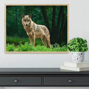 One wolf standing on green hill Framed Print - Canvas Art Rocks - 4
