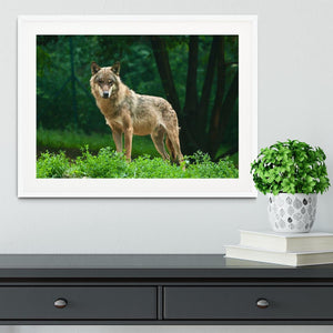 One wolf standing on green hill Framed Print - Canvas Art Rocks - 5