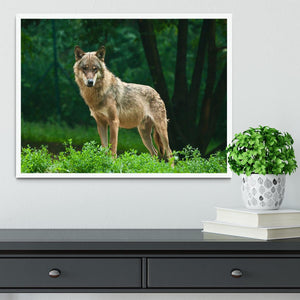 One wolf standing on green hill Framed Print - Canvas Art Rocks -6