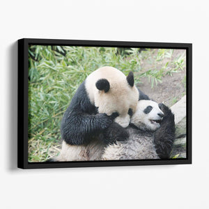 Panda bear and her cub Floating Framed Canvas - Canvas Art Rocks - 1