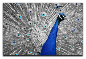 Peacock Print - Canvas Art Rocks - 1