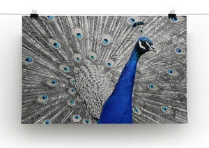 Peacock Print - Canvas Art Rocks - 2