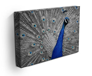 Peacock Print - Canvas Art Rocks - 3