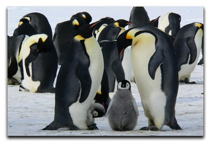 Penguins Canvas Print or Poster