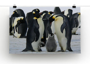 Penguins Print - Canvas Art Rocks - 2