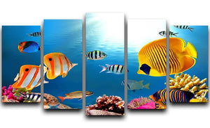 Photo of a coral colony 5 Split Panel Canvas  - Canvas Art Rocks - 1