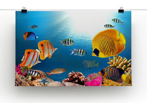 Photo of a coral colony Canvas Print or Poster - Canvas Art Rocks - 2